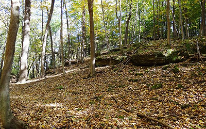 49 4 Acres Hunting Land Amp Building Site Rock